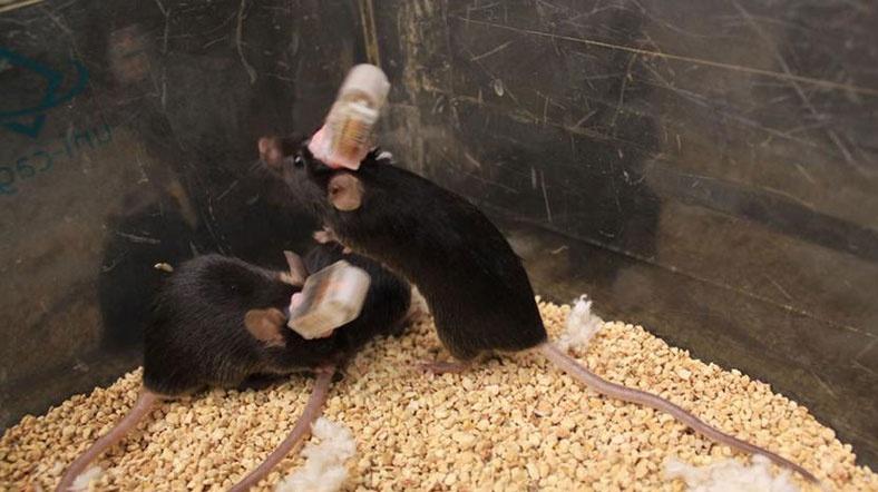 ABD'li Bilim Adamlarından Uzaktan Kumanda ile Beyin Kontrolü